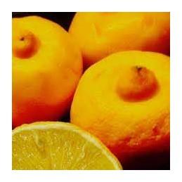 Citron Bergamote Kg - 100g