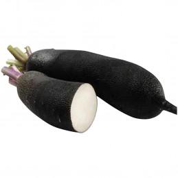 Radis Noir Long 100g
